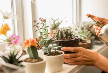چطور از گیاهان آپارتمانی نگه داری کنیم؟