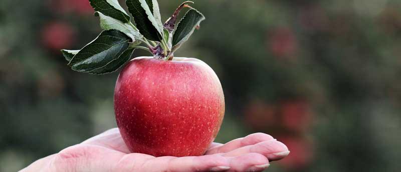 سیب سبب افزایش میل جنسی می شود